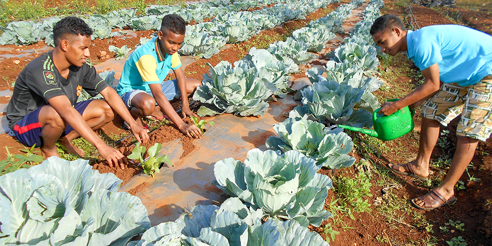 Sustainable Farm in Timor Leste